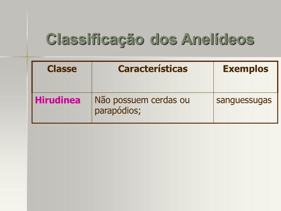 ClasseCaracterísticasExemplos Hirudinea Não possuem cerdas ou parapódios; sanguessugas Classificação dos Anelídeos