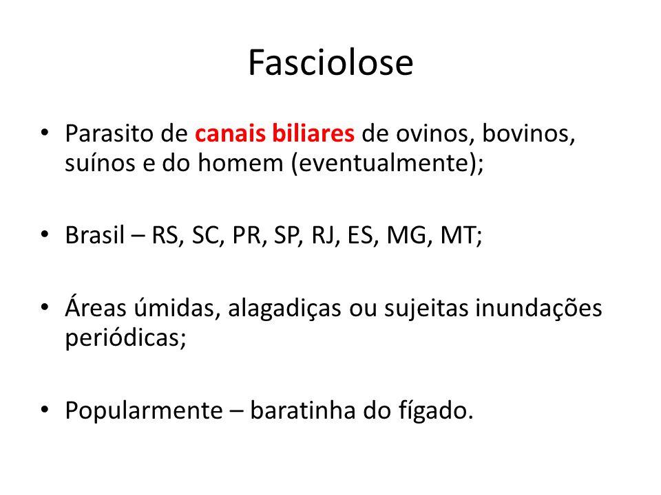 Fasciolose Parasito de canais biliares de ovinos, bovinos, suínos e do homem (eventualmente); Brasil – RS, SC, PR, SP, RJ, ES, MG, MT; Áreas úmidas, a