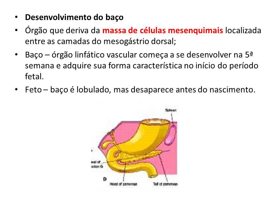 Desenvolvimento do baço Órgão que deriva da massa de células mesenquimais localizada entre as camadas do mesogástrio dorsal; Baço – órgão linfático va
