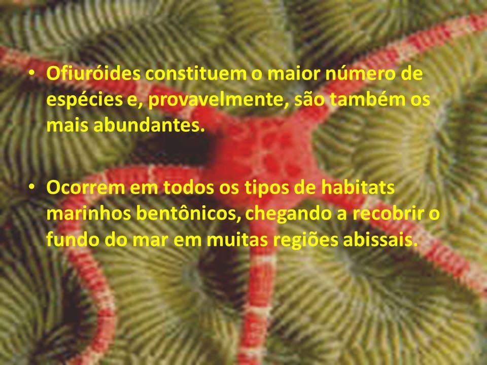 Ofiuróides constituem o maior número de espécies e, provavelmente, são também os mais abundantes. Ocorrem em todos os tipos de habitats marinhos bentô
