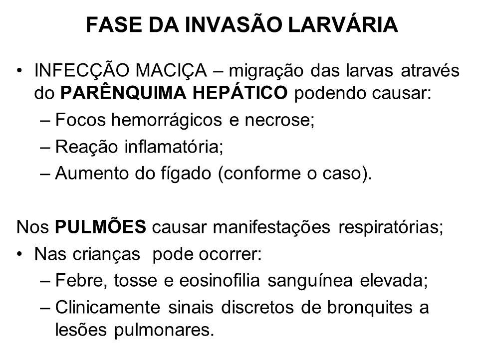 FASE DA INVASÃO LARVÁRIA INFECÇÃO MACIÇA – migração das larvas através do PARÊNQUIMA HEPÁTICO podendo causar: –Focos hemorrágicos e necrose; –Reação i