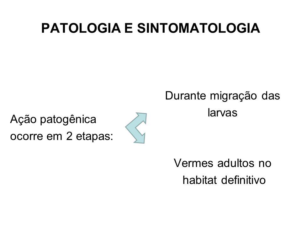 PATOLOGIA E SINTOMATOLOGIA Ação patogênica ocorre em 2 etapas: Durante migração das larvas Vermes adultos no habitat definitivo