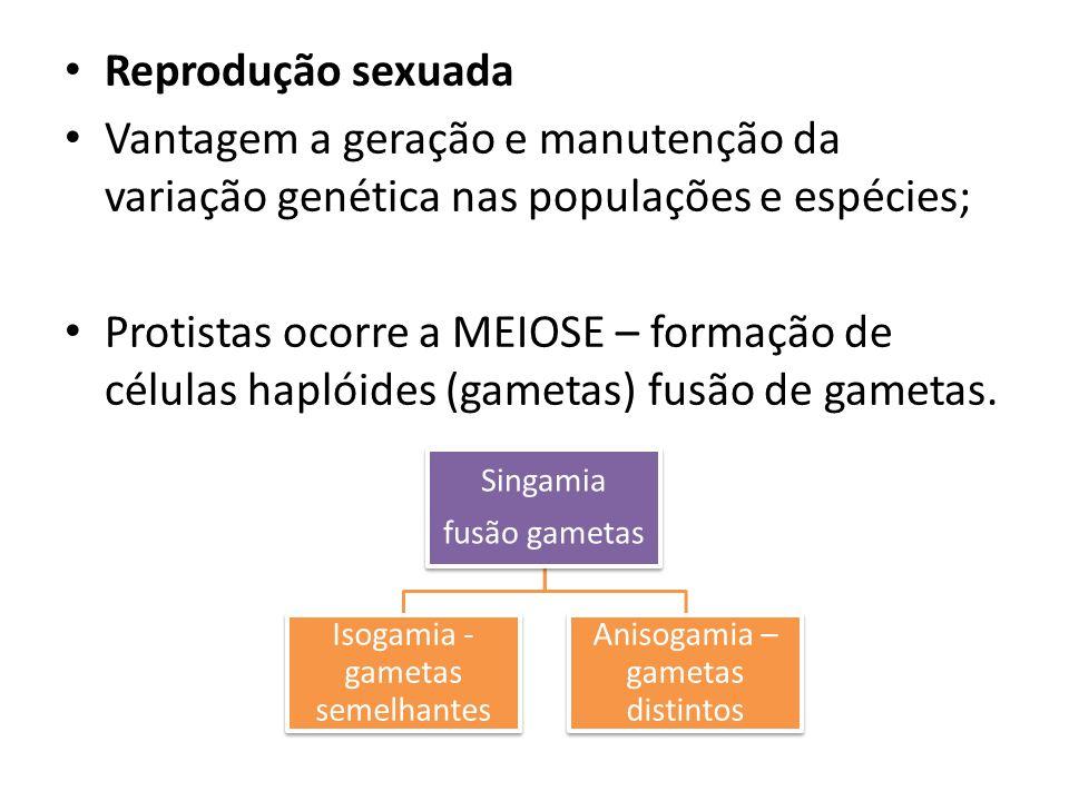 Reprodução sexuada Vantagem a geração e manutenção da variação genética nas populações e espécies; Protistas ocorre a MEIOSE – formação de células haplóides (gametas) fusão de gametas.
