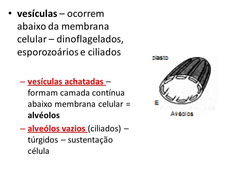 vesículas – ocorrem abaixo da membrana celular – dinoflagelados, esporozoários e ciliados – vesículas achatadas – formam camada contínua abaixo membrana celular = alvéolos – alveólos vazios (ciliados) – túrgidos – sustentação célula