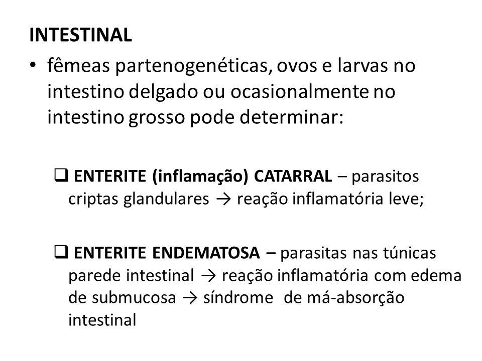 INTESTINAL fêmeas partenogenéticas, ovos e larvas no intestino delgado ou ocasionalmente no intestino grosso pode determinar: ENTERITE (inflamação) CA