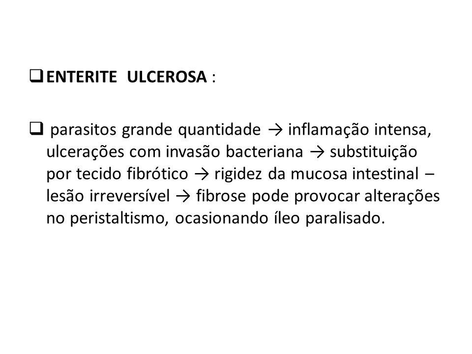 ENTERITE ULCEROSA : parasitos grande quantidade inflamação intensa, ulcerações com invasão bacteriana substituição por tecido fibrótico rigidez da muc