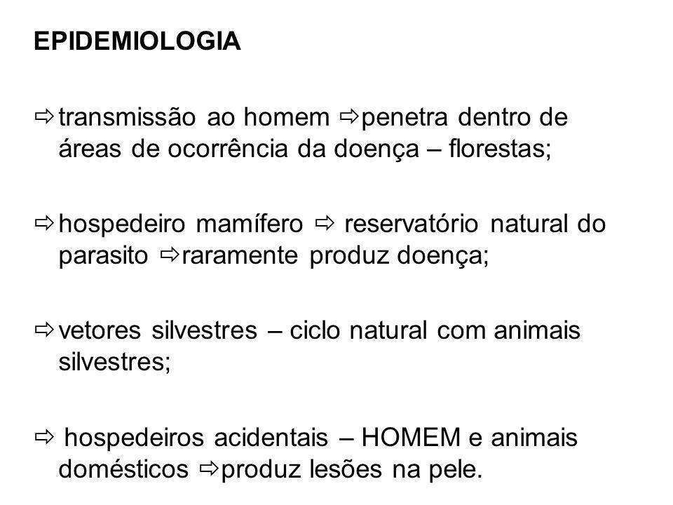 EPIDEMIOLOGIA transmissão ao homem penetra dentro de áreas de ocorrência da doença – florestas; hospedeiro mamífero reservatório natural do parasito raramente produz doença; vetores silvestres – ciclo natural com animais silvestres; hospedeiros acidentais – HOMEM e animais domésticos produz lesões na pele.