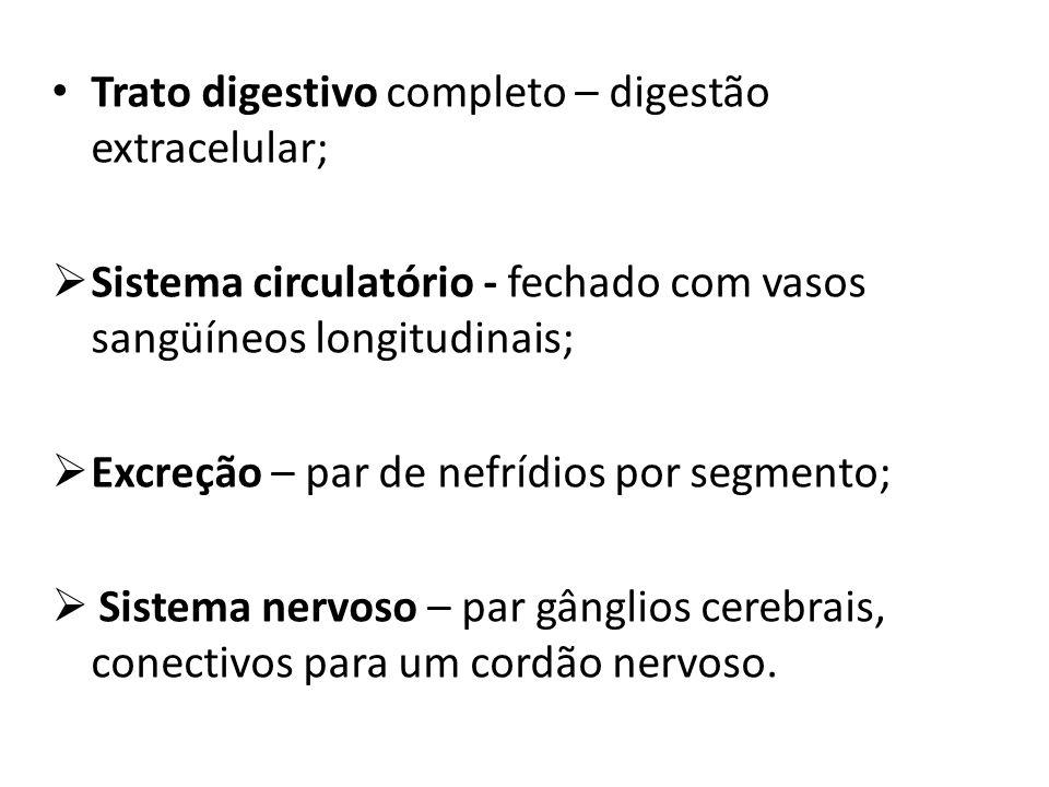 Trato digestivo completo – digestão extracelular; Sistema circulatório - fechado com vasos sangüíneos longitudinais; Excreção – par de nefrídios por s