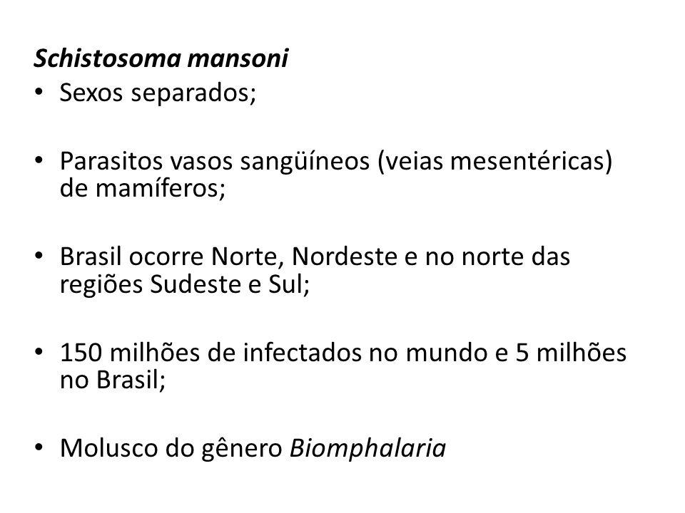 Schistosoma mansoni Sexos separados; Parasitos vasos sangüíneos (veias mesentéricas) de mamíferos; Brasil ocorre Norte, Nordeste e no norte das regiões Sudeste e Sul; 150 milhões de infectados no mundo e 5 milhões no Brasil; Molusco do gênero Biomphalaria