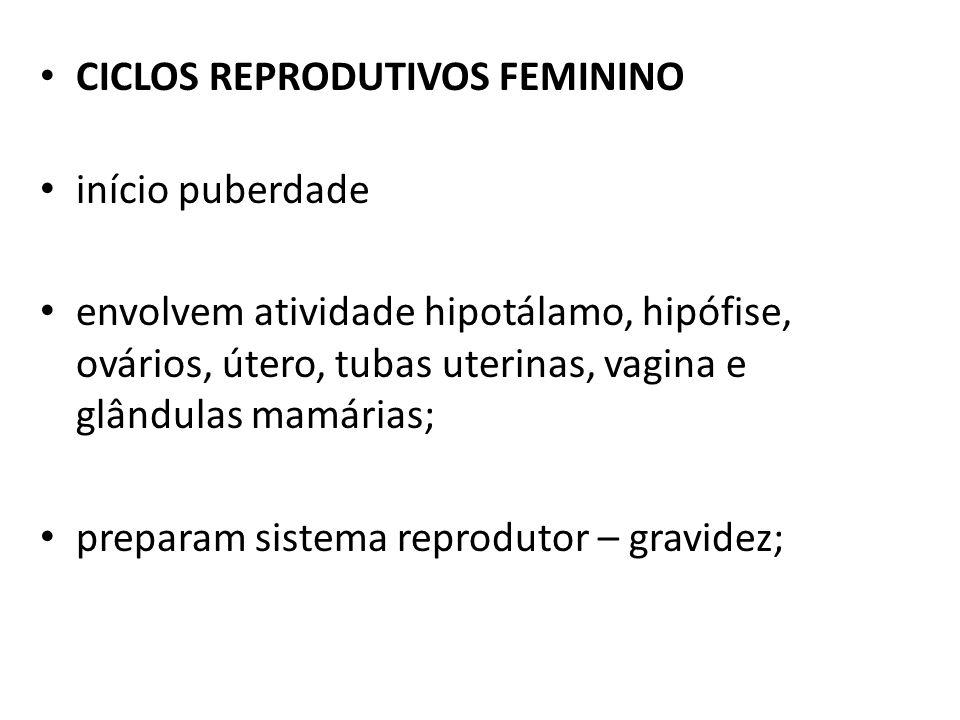 CICLOS REPRODUTIVOS FEMININO início puberdade envolvem atividade hipotálamo, hipófise, ovários, útero, tubas uterinas, vagina e glândulas mamárias; pr