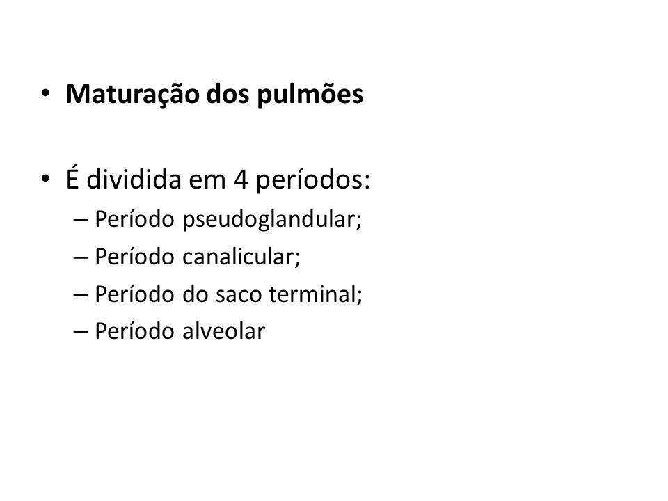 Maturação dos pulmões É dividida em 4 períodos: – Período pseudoglandular; – Período canalicular; – Período do saco terminal; – Período alveolar