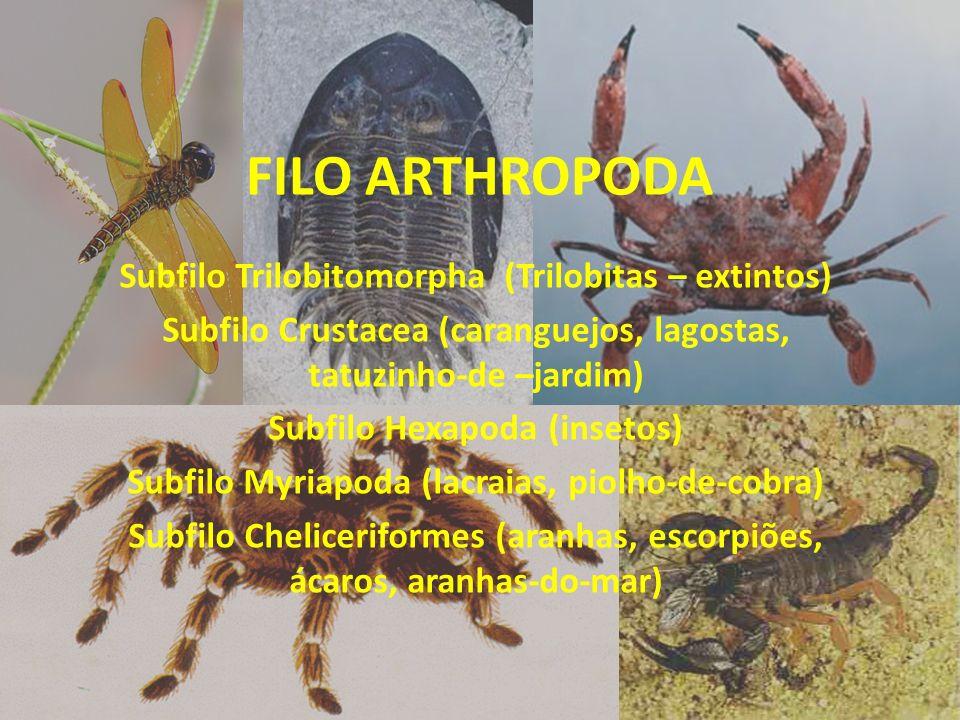 FILO ARTHROPODA Subfilo Trilobitomorpha (Trilobitas – extintos) Subfilo Crustacea (caranguejos, lagostas, tatuzinho-de –jardim) Subfilo Hexapoda (inse