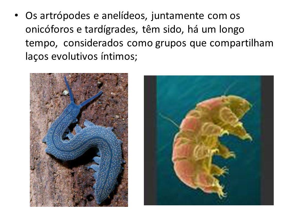Os artrópodes e anelídeos, juntamente com os onicóforos e tardígrades, têm sido, há um longo tempo, considerados como grupos que compartilham laços ev