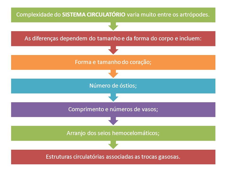 Estruturas circulatórias associadas as trocas gasosas. Arranjo dos seios hemocelomáticos; Comprimento e números de vasos; Número de óstios; Forma e ta