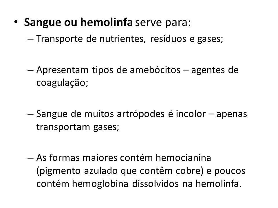 Sangue ou hemolinfa serve para: – Transporte de nutrientes, resíduos e gases; – Apresentam tipos de amebócitos – agentes de coagulação; – Sangue de mu