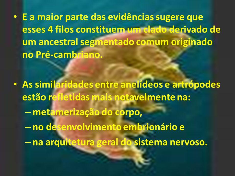 E a maior parte das evidências sugere que esses 4 filos constituem um clado derivado de um ancestral segmentado comum originado no Pré-cambriano. As s