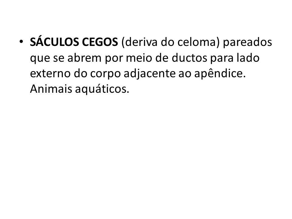 SÁCULOS CEGOS (deriva do celoma) pareados que se abrem por meio de ductos para lado externo do corpo adjacente ao apêndice. Animais aquáticos.
