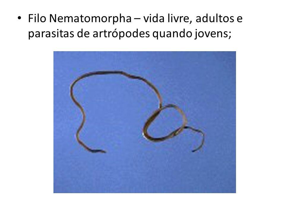 Filo Nematomorpha – vida livre, adultos e parasitas de artrópodes quando jovens;