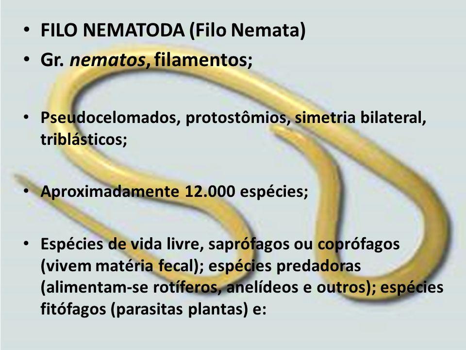 FILO NEMATODA (Filo Nemata) Gr. nematos, filamentos; Pseudocelomados, protostômios, simetria bilateral, triblásticos; Aproximadamente 12.000 espécies;