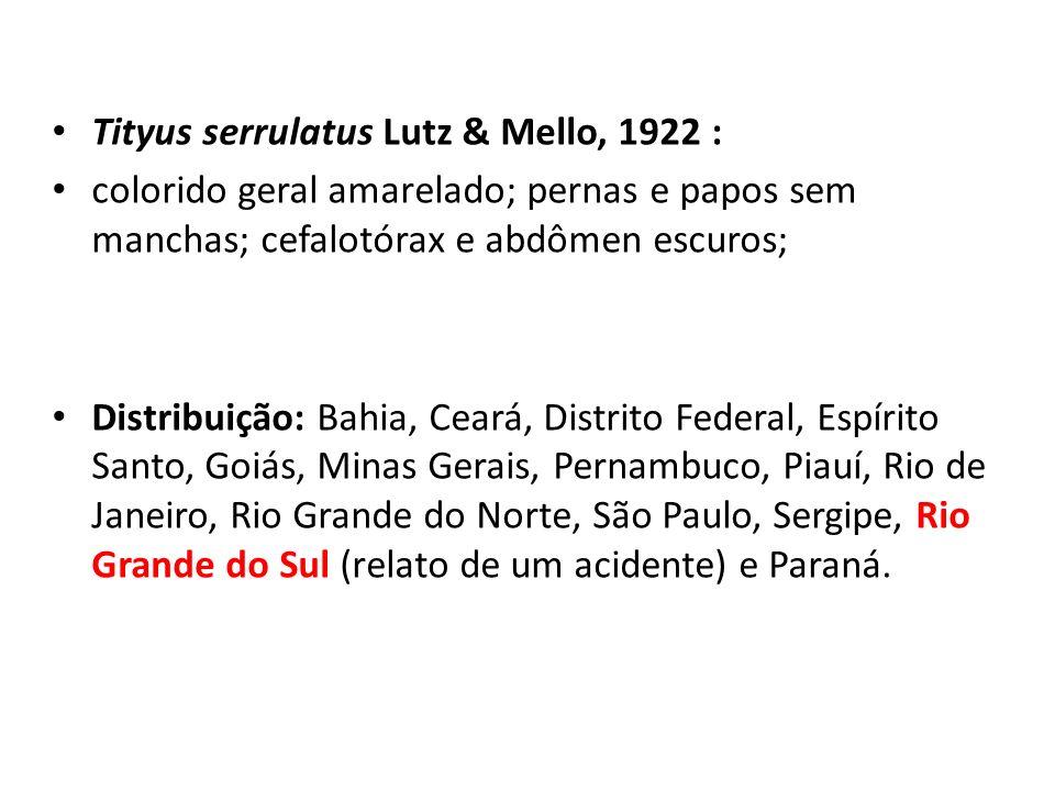Tityus serrulatus Lutz & Mello, 1922 : colorido geral amarelado; pernas e papos sem manchas; cefalotórax e abdômen escuros; Distribuição: Bahia, Ceará