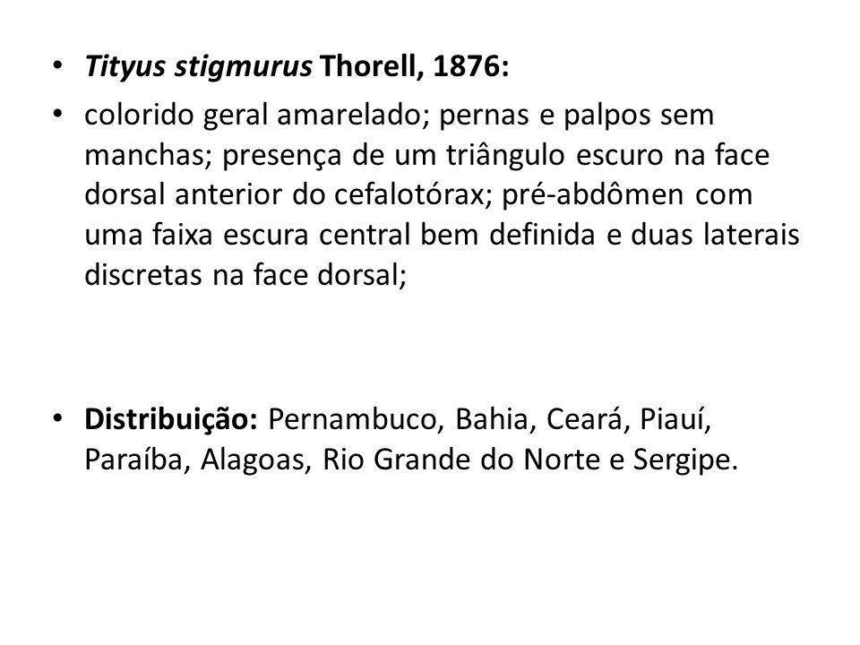 Tityus stigmurus Thorell, 1876: colorido geral amarelado; pernas e palpos sem manchas; presença de um triângulo escuro na face dorsal anterior do cefa