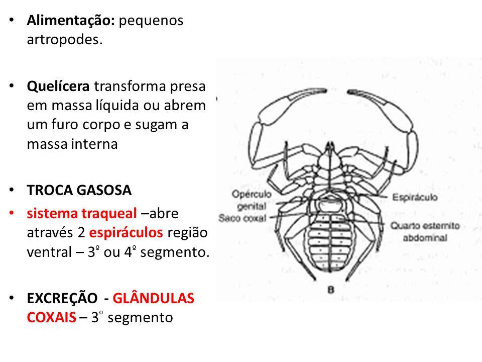 Alimentação: pequenos artropodes. Quelícera transforma presa em massa líquida ou abrem um furo corpo e sugam a massa interna TROCA GASOSA sistema traq