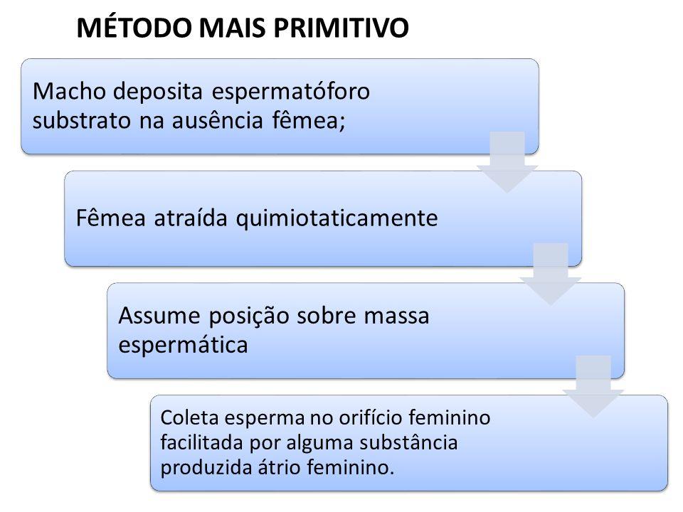 MÉTODO MAIS PRIMITIVO Macho deposita espermatóforo substrato na ausência fêmea; Fêmea atraída quimiotaticamente Assume posição sobre massa espermática