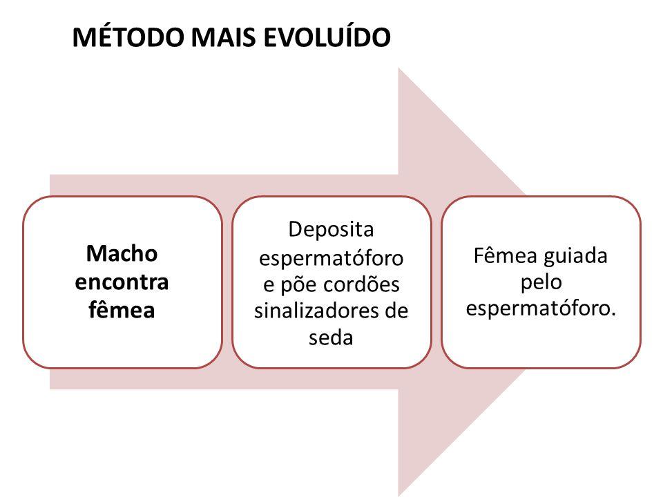 MÉTODO MAIS EVOLUÍDO Macho encontra fêmea Deposita espermatóforo e põe cordões sinalizadores de seda Fêmea guiada pelo espermatóforo.