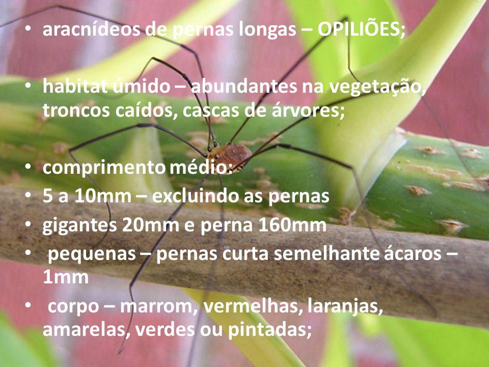 aracnídeos de pernas longas – OPILIÕES; habitat úmido – abundantes na vegetação, troncos caídos, cascas de árvores; comprimento médio: 5 a 10mm – excl