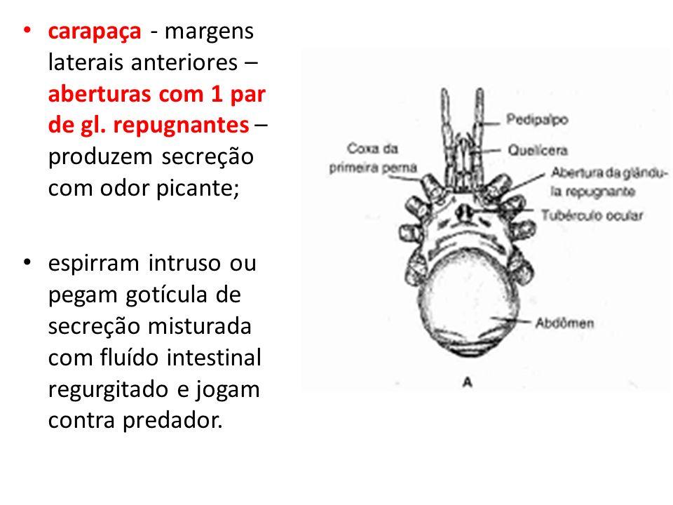 carapaça - margens laterais anteriores – aberturas com 1 par de gl. repugnantes – produzem secreção com odor picante; espirram intruso ou pegam gotícu
