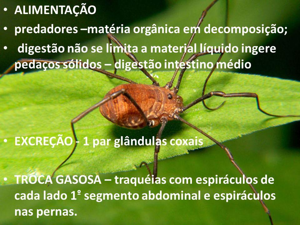 ALIMENTAÇÃO predadores –matéria orgânica em decomposição; digestão não se limita a material líquido ingere pedaços sólidos – digestão intestino médio