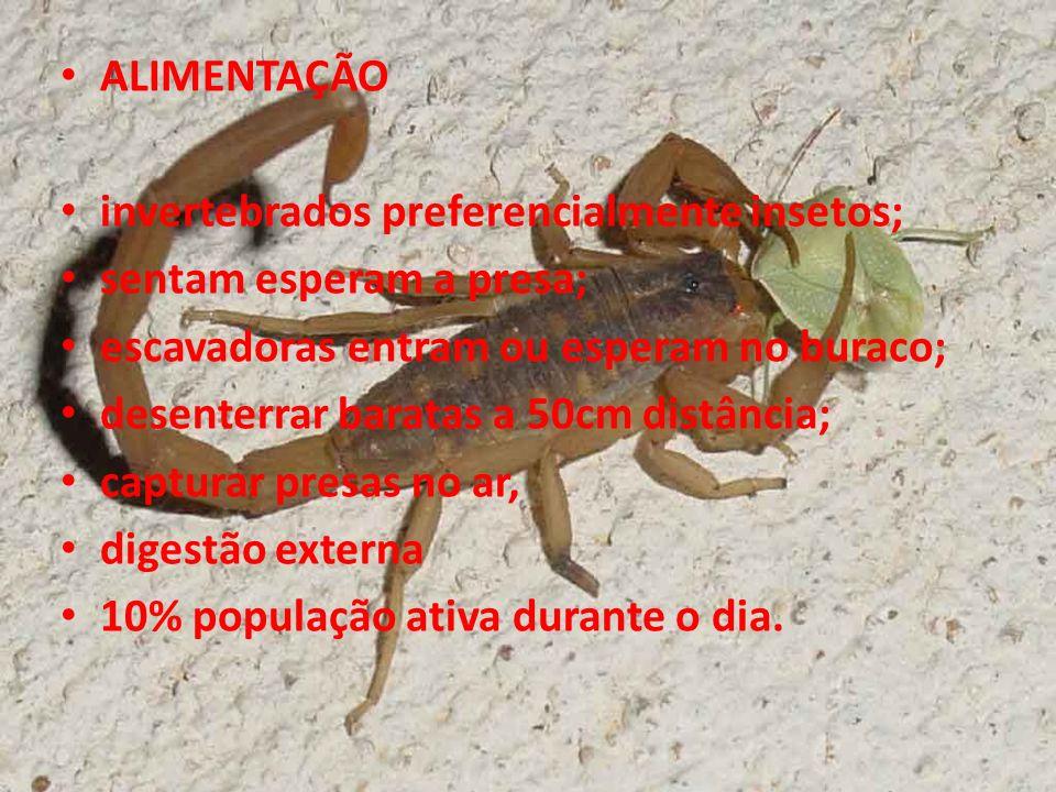 ALIMENTAÇÃO invertebrados preferencialmente insetos; sentam esperam a presa; escavadoras entram ou esperam no buraco; desenterrar baratas a 50cm distâ