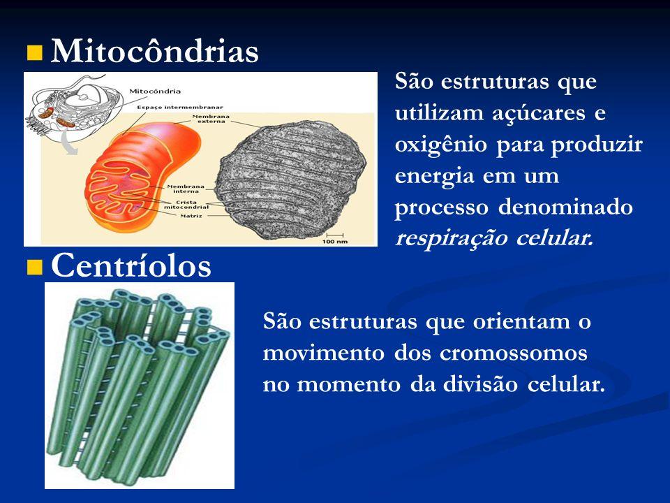 Mitocôndrias Centríolos São estruturas que utilizam açúcares e oxigênio para produzir energia em um processo denominado respiração celular. São estrut