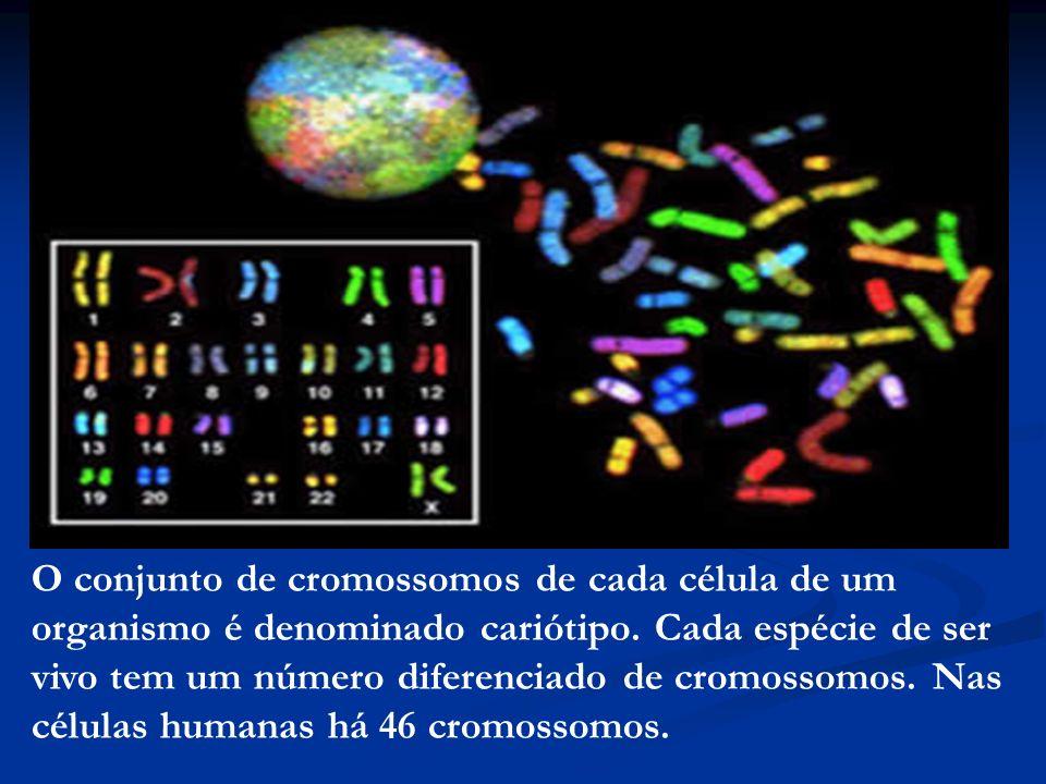 O conjunto de cromossomos de cada célula de um organismo é denominado cariótipo. Cada espécie de ser vivo tem um número diferenciado de cromossomos. N