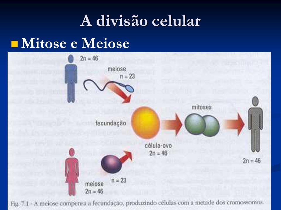 A divisão celular Mitose e Meiose