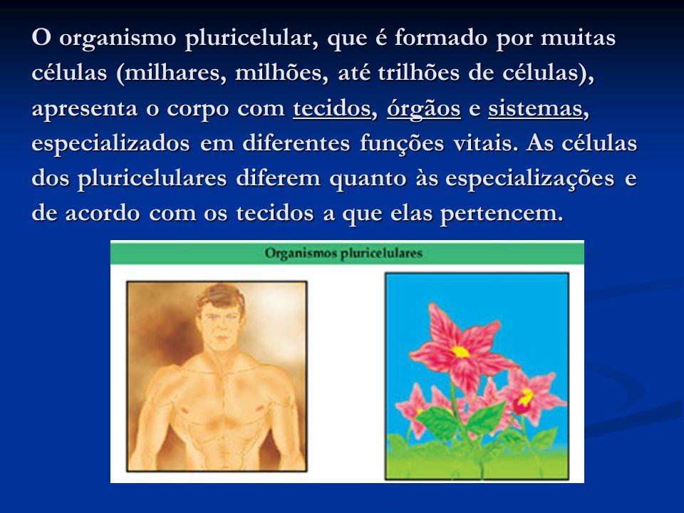 O organismo pluricelular, que é formado por muitas células (milhares, milhões, até trilhões de células), apresenta o corpo com tecidos, órgãos e siste
