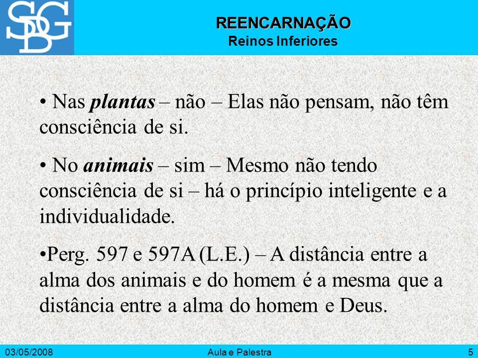03/05/2008Aula e Palestra5 REENCARNAÇÃO Reinos Inferiores Nas plantas – não – Elas não pensam, não têm consciência de si. No animais – sim – Mesmo não