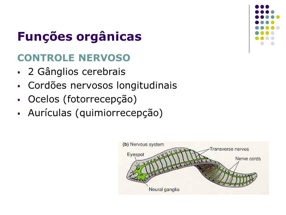 Funções orgânicas CONTROLE NERVOSO 2 Gânglios cerebrais Cordões nervosos longitudinais Ocelos (fotorrecepção) Aurículas (quimiorrecepção)