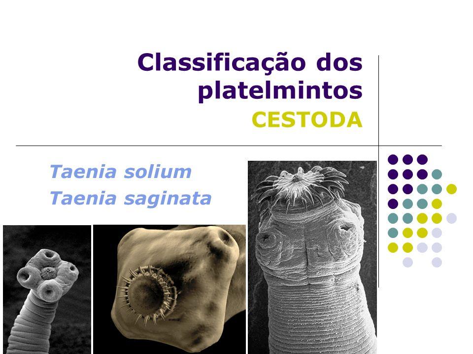 Classificação dos platelmintos CESTODA Taenia solium Taenia saginata