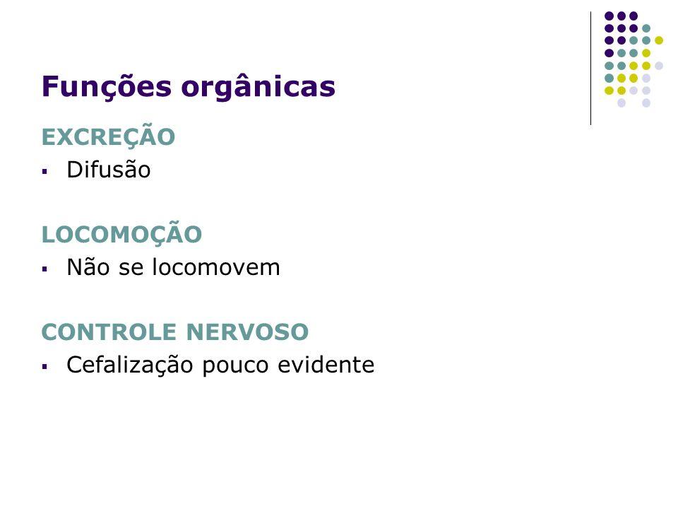 Funções orgânicas EXCREÇÃO Difusão LOCOMOÇÃO Não se locomovem CONTROLE NERVOSO Cefalização pouco evidente