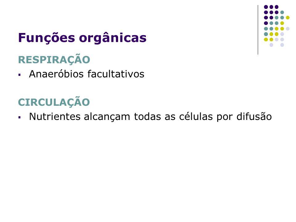 Funções orgânicas RESPIRAÇÃO Anaeróbios facultativos CIRCULAÇÃO Nutrientes alcançam todas as células por difusão
