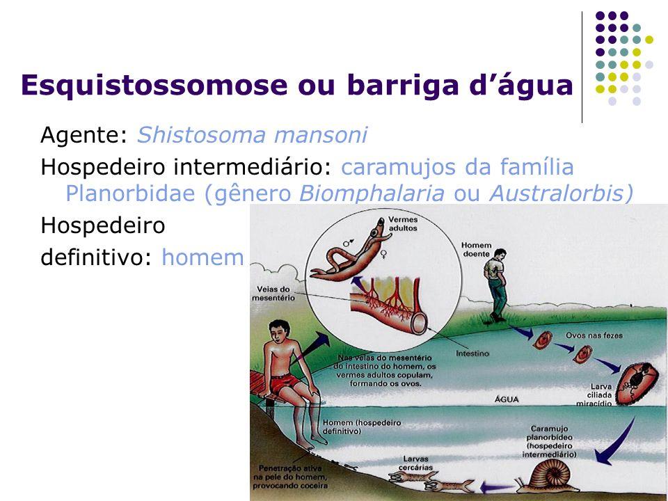 Esquistossomose ou barriga dágua Agente: Shistosoma mansoni Hospedeiro intermediário: caramujos da família Planorbidae (gênero Biomphalaria ou Austral
