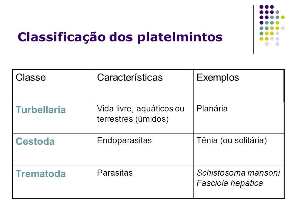 ClasseCaracterísticasExemplos Turbellaria Vida livre, aquáticos ou terrestres (úmidos) Planária Cestoda EndoparasitasTênia (ou solitária) Trematoda Pa