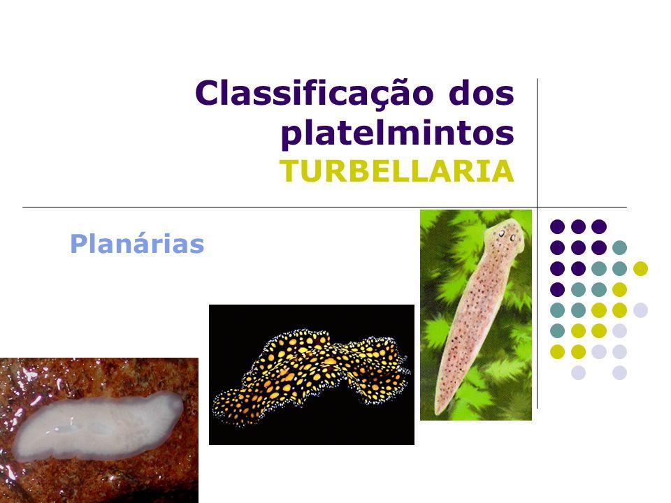 Classificação dos platelmintos TURBELLARIA Planárias