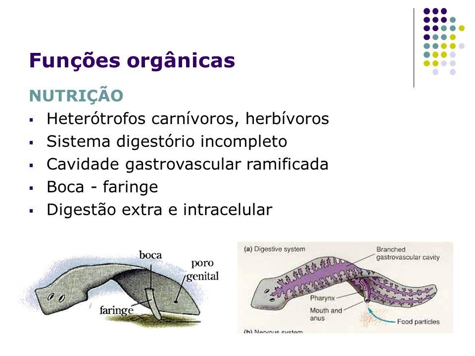 Funções orgânicas NUTRIÇÃO Heterótrofos carnívoros, herbívoros Sistema digestório incompleto Cavidade gastrovascular ramificada Boca - faringe Digestã