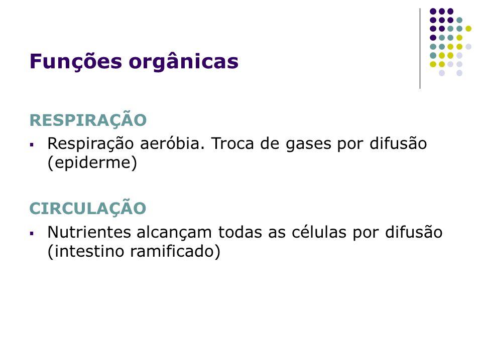 Funções orgânicas RESPIRAÇÃO Respiração aeróbia. Troca de gases por difusão (epiderme) CIRCULAÇÃO Nutrientes alcançam todas as células por difusão (in