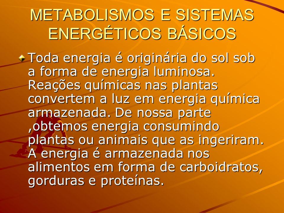 METABOLISMOS E SISTEMAS ENERGÉTICOS BÁSICOS Toda energia é originária do sol sob a forma de energia luminosa. Reações químicas nas plantas convertem a