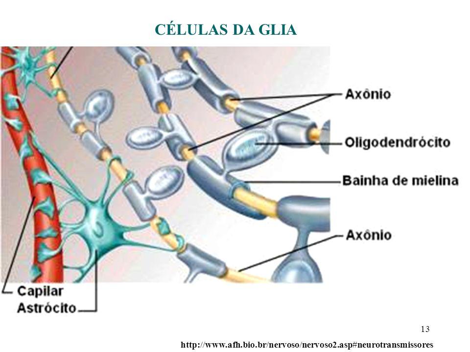 13 http://www.afh.bio.br/nervoso/nervoso2.asp#neurotransmissores CÉLULAS DA GLIA