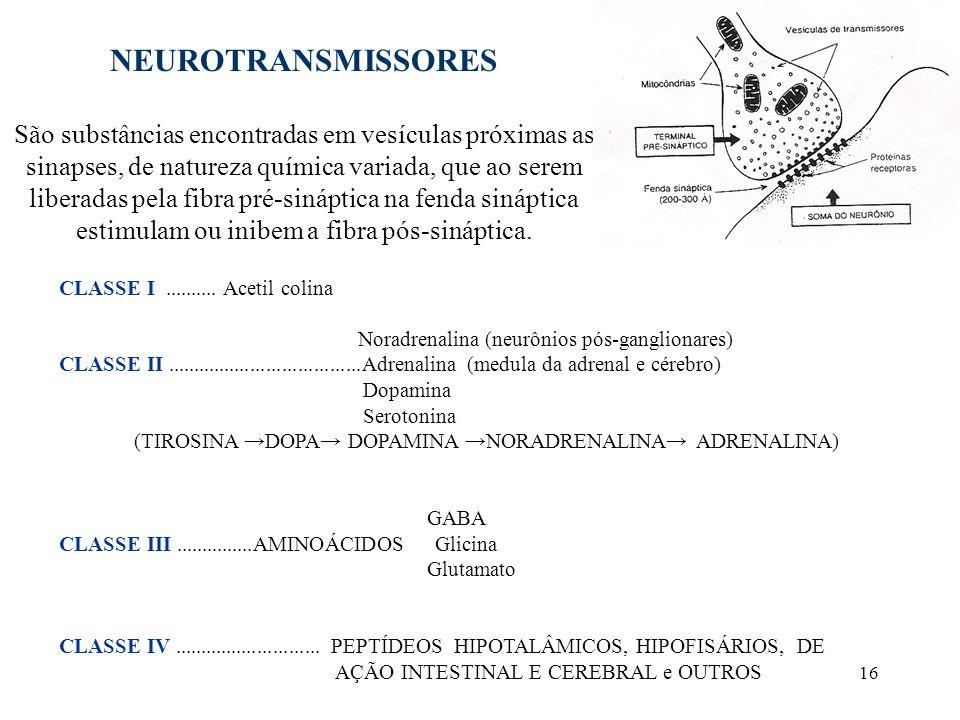 16 NEUROTRANSMISSORES São substâncias encontradas em vesículas próximas as sinapses, de natureza química variada, que ao serem liberadas pela fibra pr