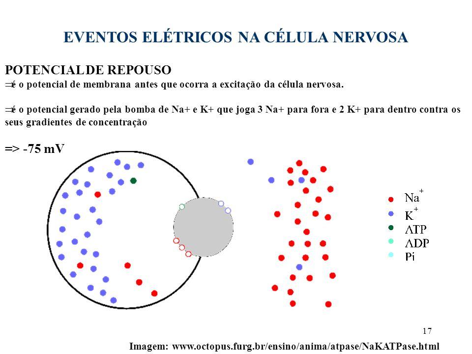17 EVENTOS ELÉTRICOS NA CÉLULA NERVOSA POTENCIAL DE REPOUSO é o potencial de membrana antes que ocorra a excitação da célula nervosa. é o potencial ge
